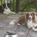 Basel Holiday Cottage in Llandovery where up to Two Dogs Can Stay Free of Charge
