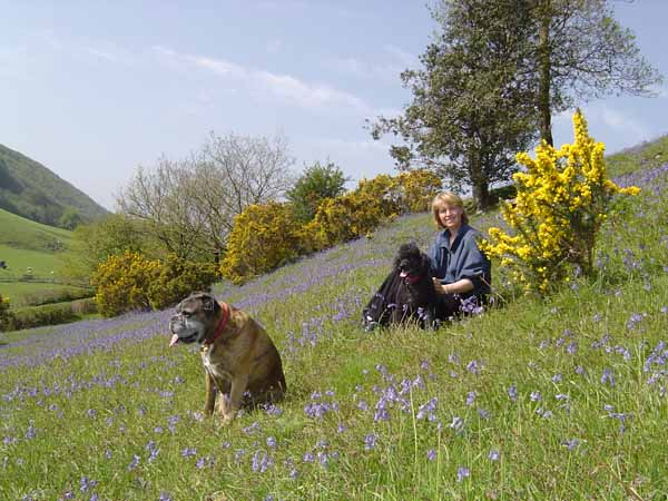Dog Friendly Holidays at Basel Holiday Cottage in Llandovery, Wales