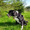 Dog Holidays, dog friendly, dogs stay free, holiday in Wales, walking holidays, countryside, Basel Cottage, Holiday Cottage, award-winning