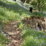 Bluebell Walks at Basel Holiday Cottage in Llandovery, Dog Friendly