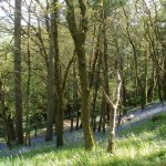 Bluebell Walks At Basel Holiday Cottage in Llandovery, Wales