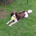 Basel Cottage Llandovery Carmarthenshire dog friendly