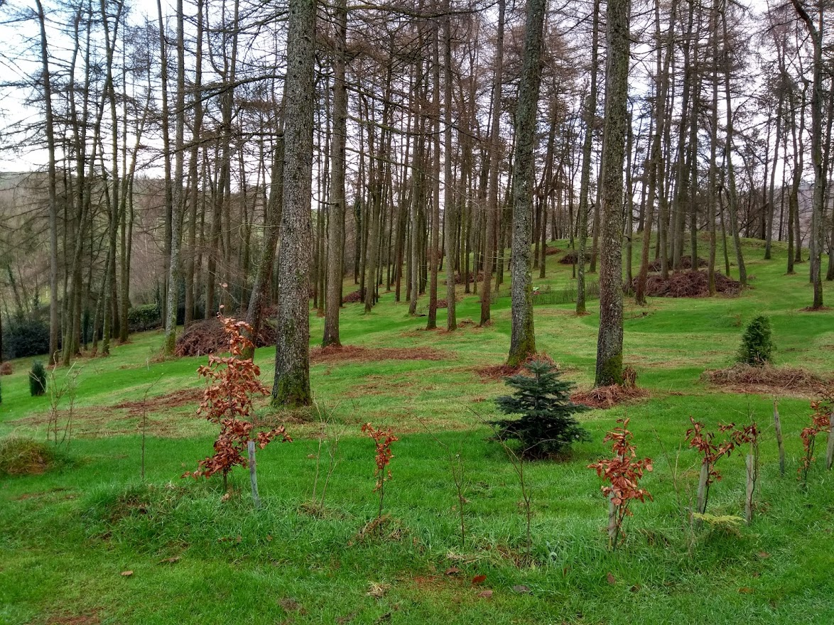 Tree Planting, Plant Britain, Countryfile, Climate Control, Health and Well Being,g friendly, award-winning, holiday cottage, Llandovery, South Wales, Winner,