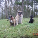 Basel Holiday Cottage in Llandovery, Dog Friendly, Dogs Welcome