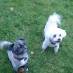 Dog holidays Llandovery at Basel Cottage